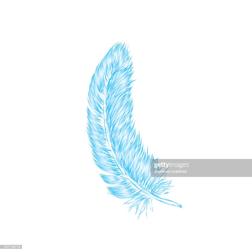 Vector hand drawn line art style feather for poster, banner, logo, icon. Fluffy feathers on transparent background in realistic style. Lightweight sketch illustration, for patterns, ink drawing
