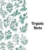 Vector hand drawn medical herbs