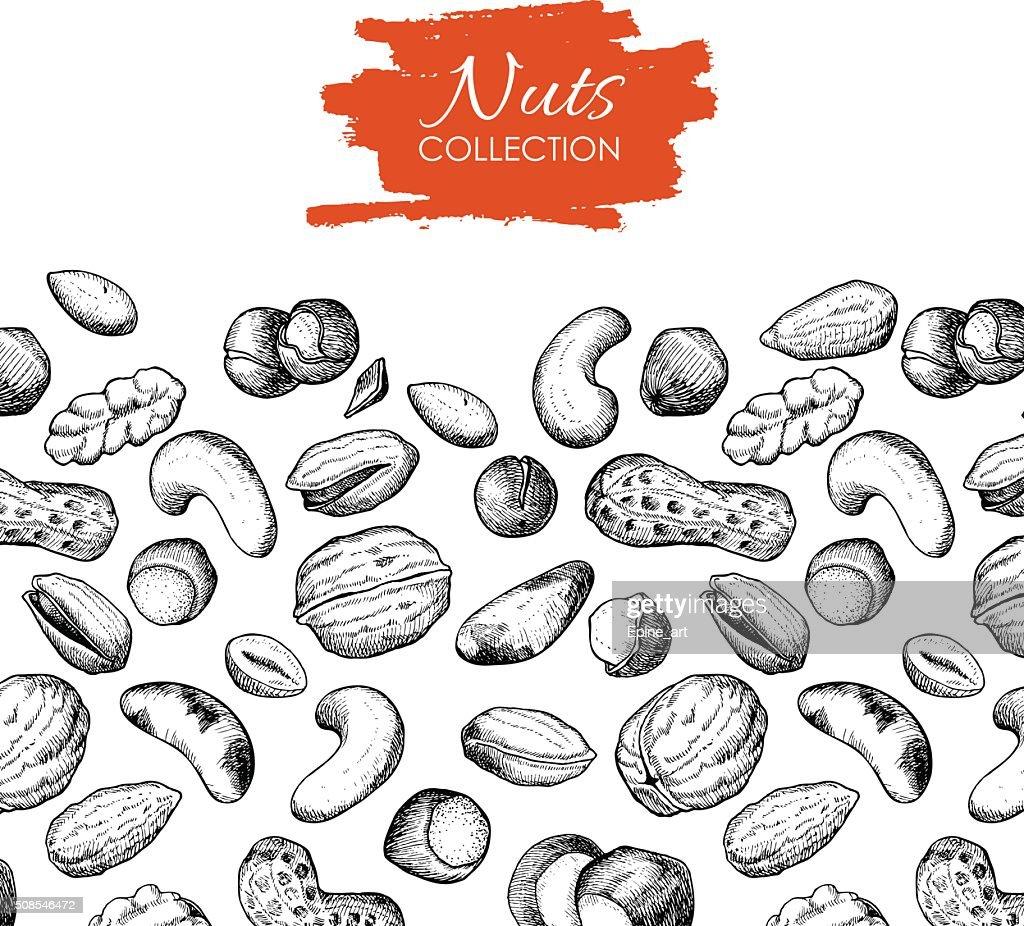 Vector hand drawn nuts illustration.