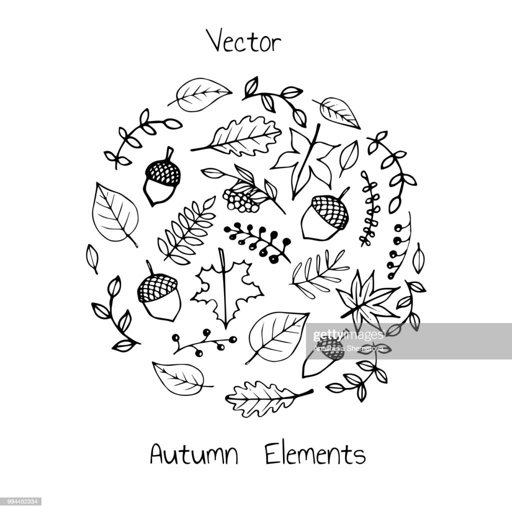 Vector hand drawn set of autumn elements: foliage, berries and acorns. Maple, sycamore, birch, beech and oak tree leaves. For your design.
