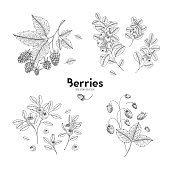 Vector hand drawn set of berries. Bluberry, raspberry, cranberry, wild strawberry. Engraved style vector illustration. Use for restaurant, menu, smoothie bowl, market, cafe, recipes, package design.