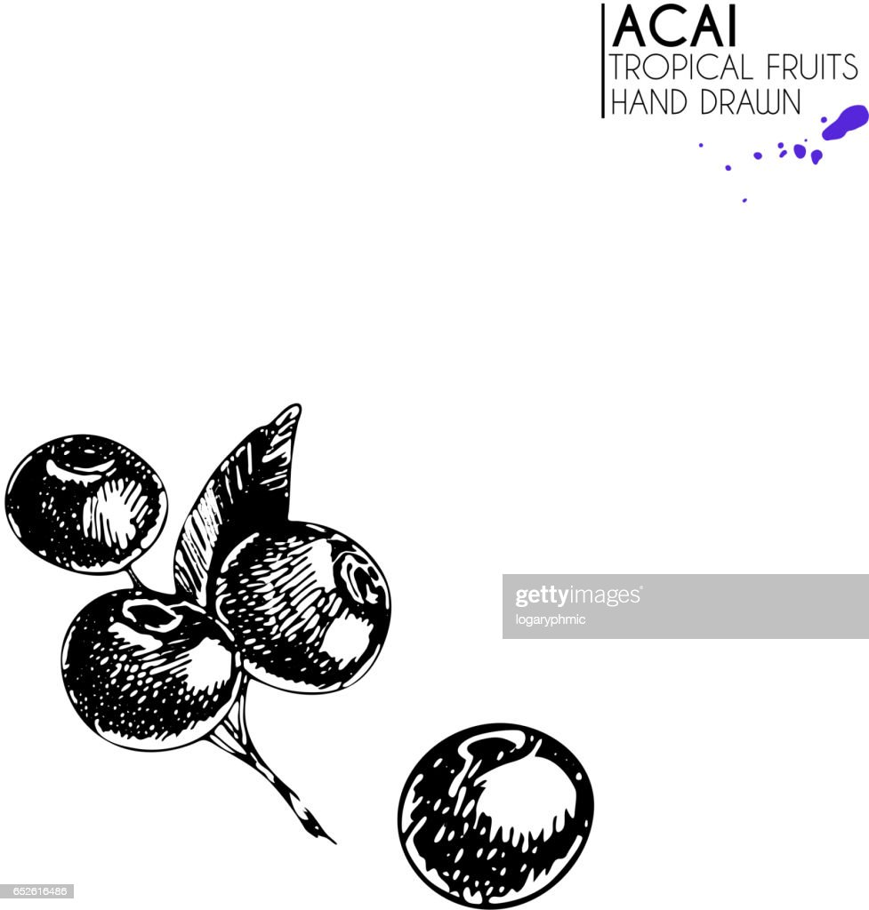 Vector hand drawn set of exotic fruits. Ioslated acai berrry set. Engraved art. Delicicous tropical vegetarian objects.