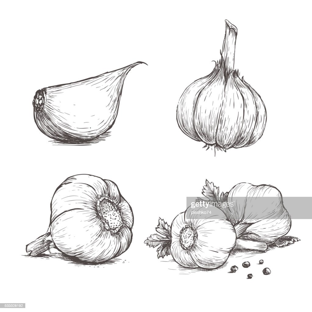 Vector hand drawn set of garlic.