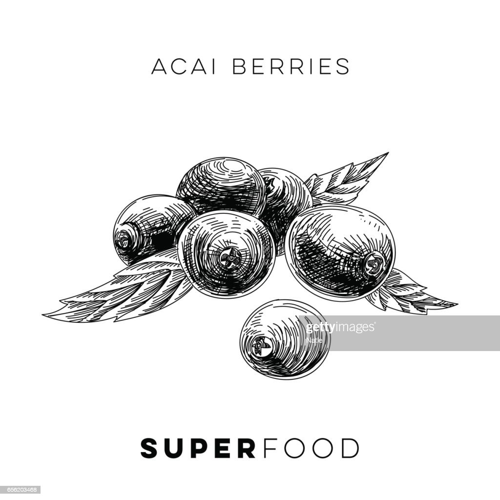 Vector hand drawn superfood Illustration.