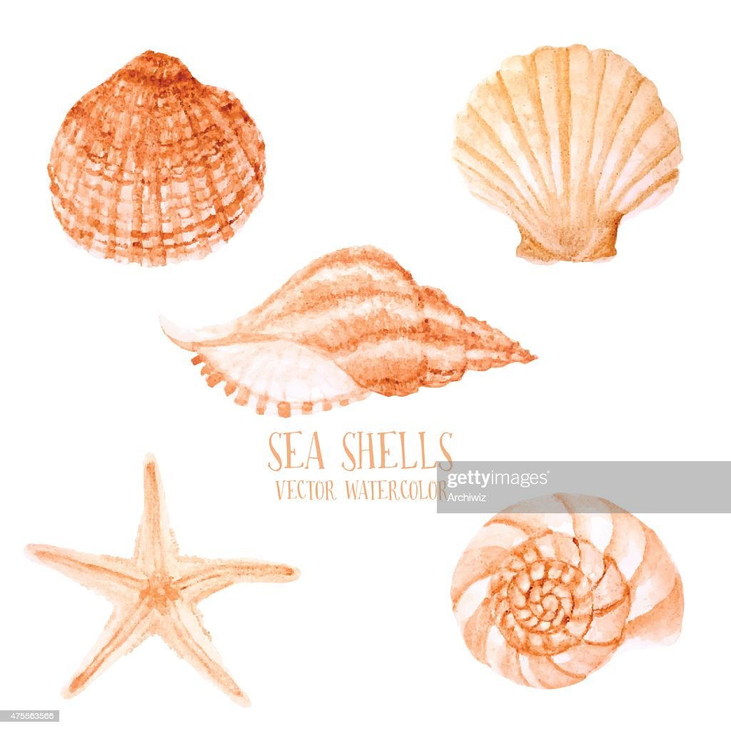 Vector hand drawn Watercolor sea shells.