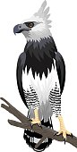 vector Harpy Eagle