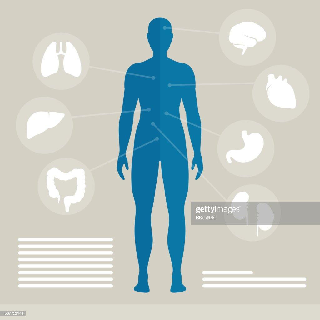 Vector Human Organs