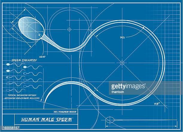 vector human sperm blueprint - sperm stock illustrations