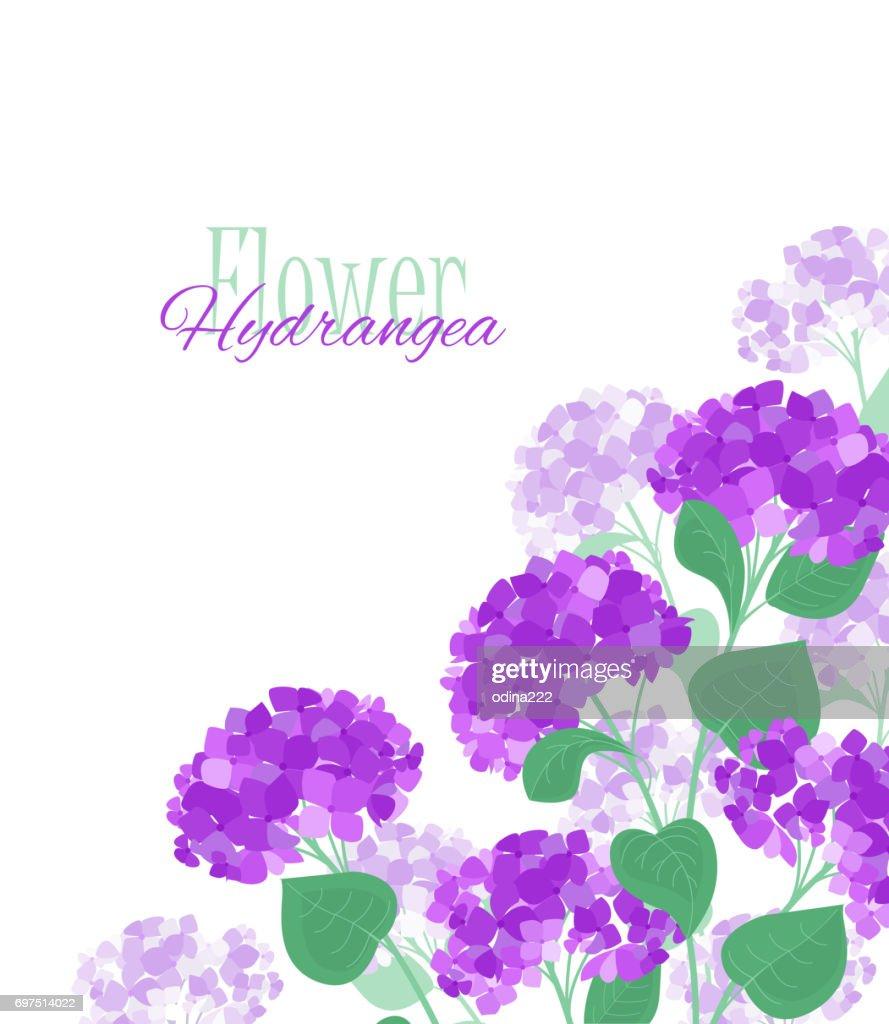 Vector Hydrangea Flower Stock Illustration Getty Images