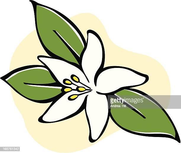 花のベクトルアイコンの白い背景で隔離されます。 - おしべ点のイラスト素材/クリップアート素材/マンガ素材/アイコン素材