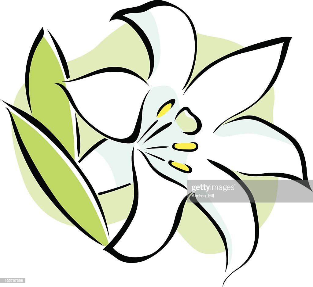 vector icon of an easter lily flower on white background vector art rh gettyimages com easter lily clip art for church bulletins easter lily clip art black and white