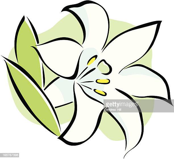 vector icon of an easter lily flower on white background. - easter lily stock illustrations
