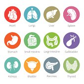 Vector icon set of human internal organs in flat style