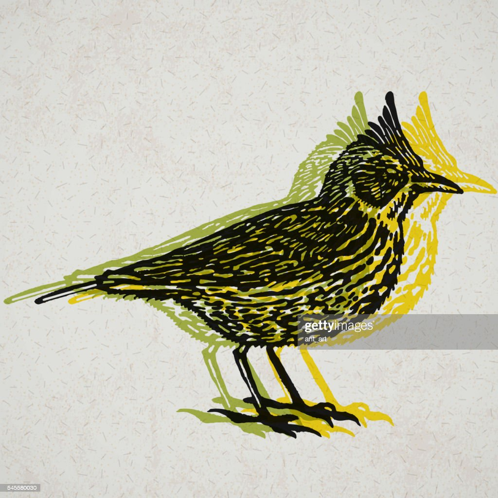 Vector Illustrated lark bird in engraved technic on old paper