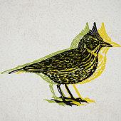 Vector Illustrated lark bird in engraved technic on old paper