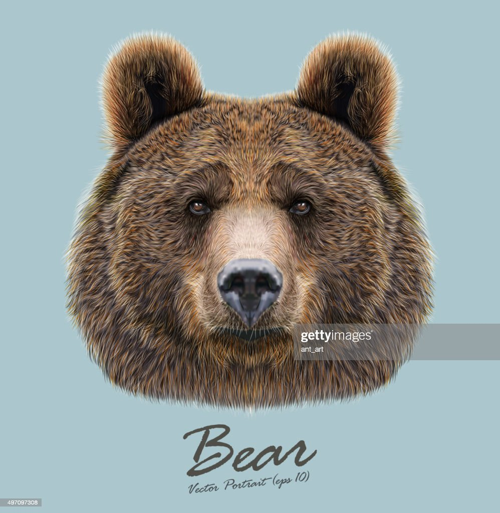 Vector Illustrated Portrait of Bear on blue background