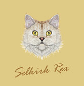 Vector Illustrated portrait of Selkirk Rex cat.