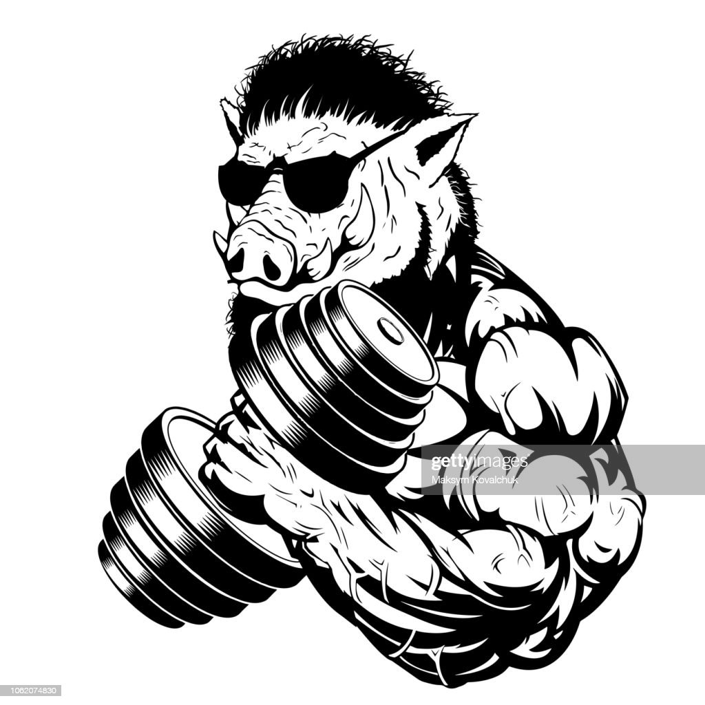 Vector illustration a strong ferocious boar bodybuilder shows a large bicep