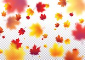 Vector illustration autumn flying red, orange, brown, yellow maple leaves