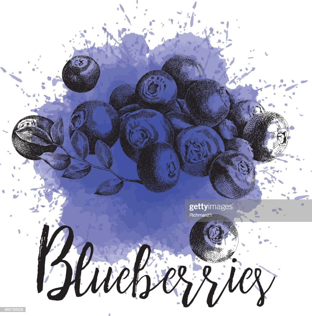 Vector illustration blueberries in hand-drawn graphics