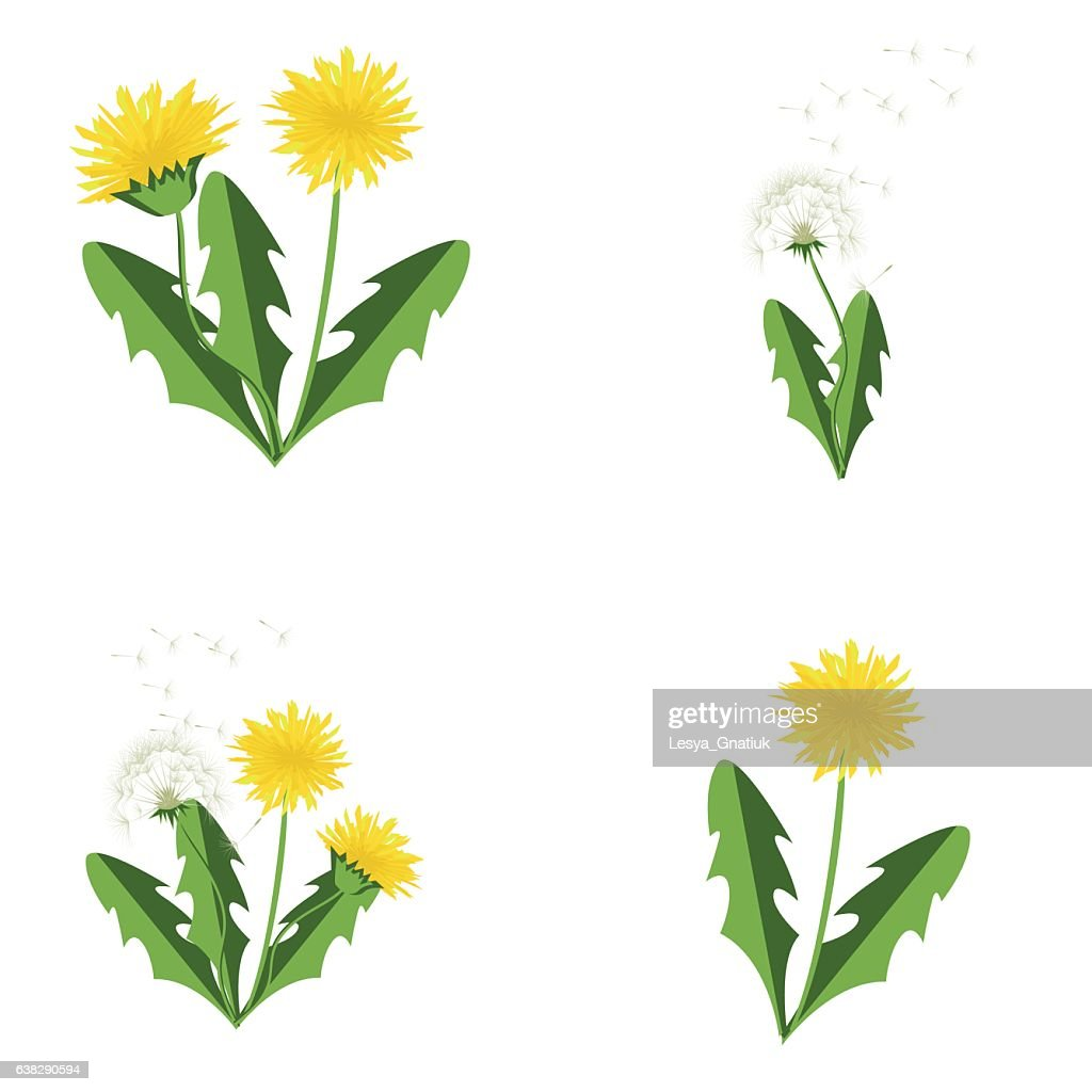 Vector illustration dandelions set with leaves.