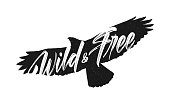 Vector illustration: Handwritten brush lettering of Wild and Free on silhouette of flying hawk background