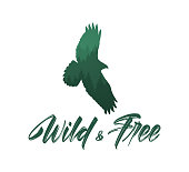 Vector illustration: Handwritten brush lettering of Wild and Free with forest silhouette of flying hawk