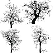 Vector illustration of 4 types of dead trees without leaves