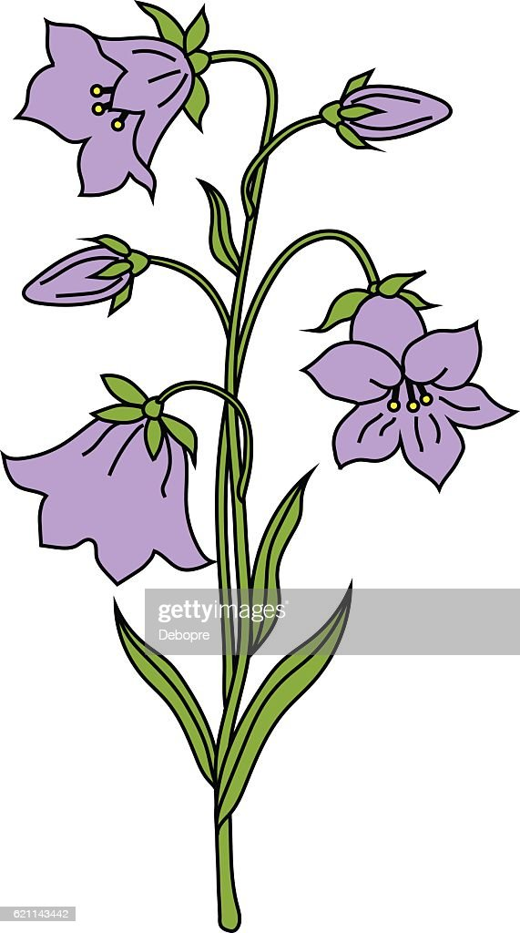 Vector illustration of bell flowers