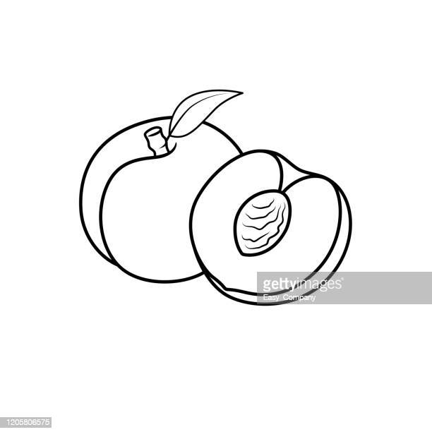 vector illustration of black and white apricot vector isolated on white background for children colouring book. - apricot stock illustrations