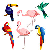 Vector illustration of bright color exotic tropical birds set isolated on white background in flat style.