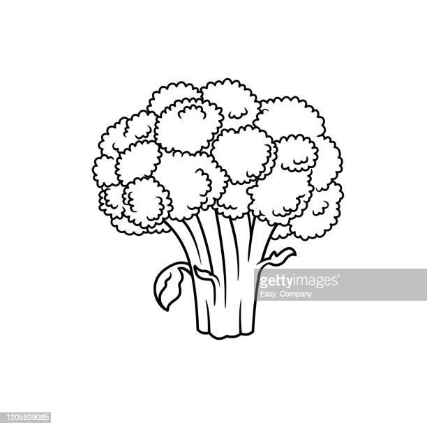 vector illustration of broccoli isolated on white background for kids coloring book. - drawing artistic product stock illustrations