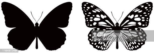 vektor-illustration des schmetterlings auf weißem hintergrund. es gibt zwei versionen, schwarze form und schwarz und weiß - schmetterling stock-grafiken, -clipart, -cartoons und -symbole