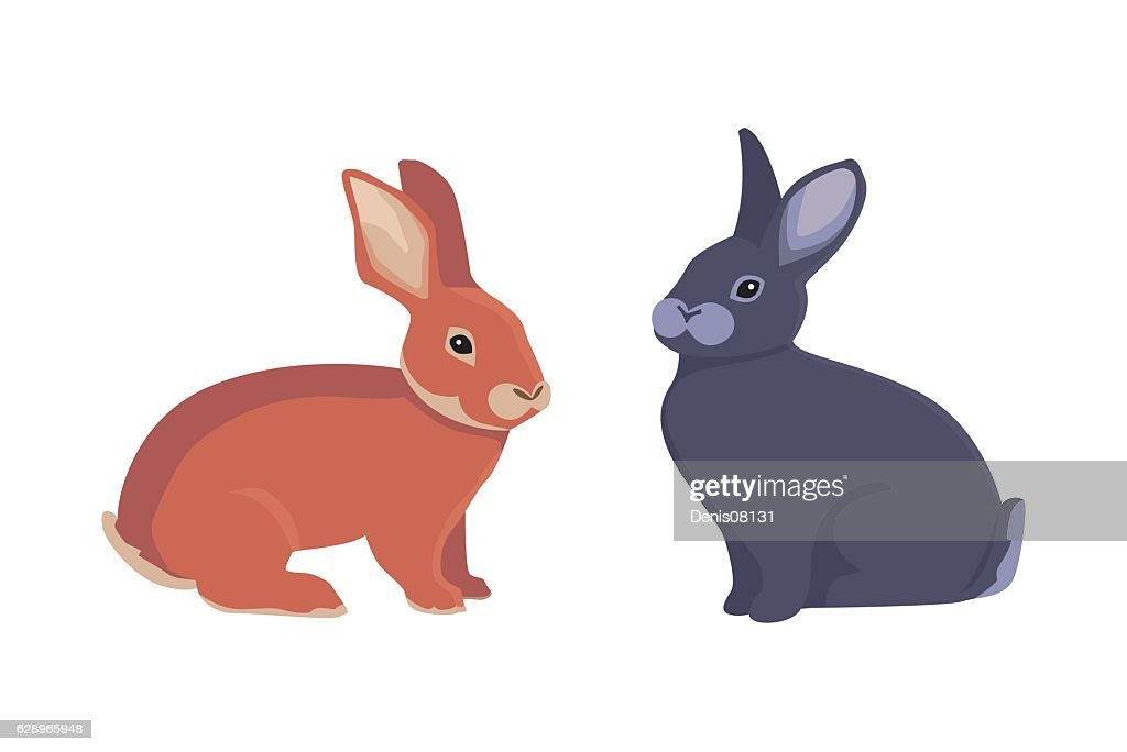 vector illustration of cartoon rabbits different breeds. Fine bunnys for