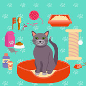 Vector illustration of cat and different Pet care accessories for cats. icons collection in flat style.