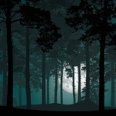 vector illustration of coniferous forest under night sky with stars and moon full moon