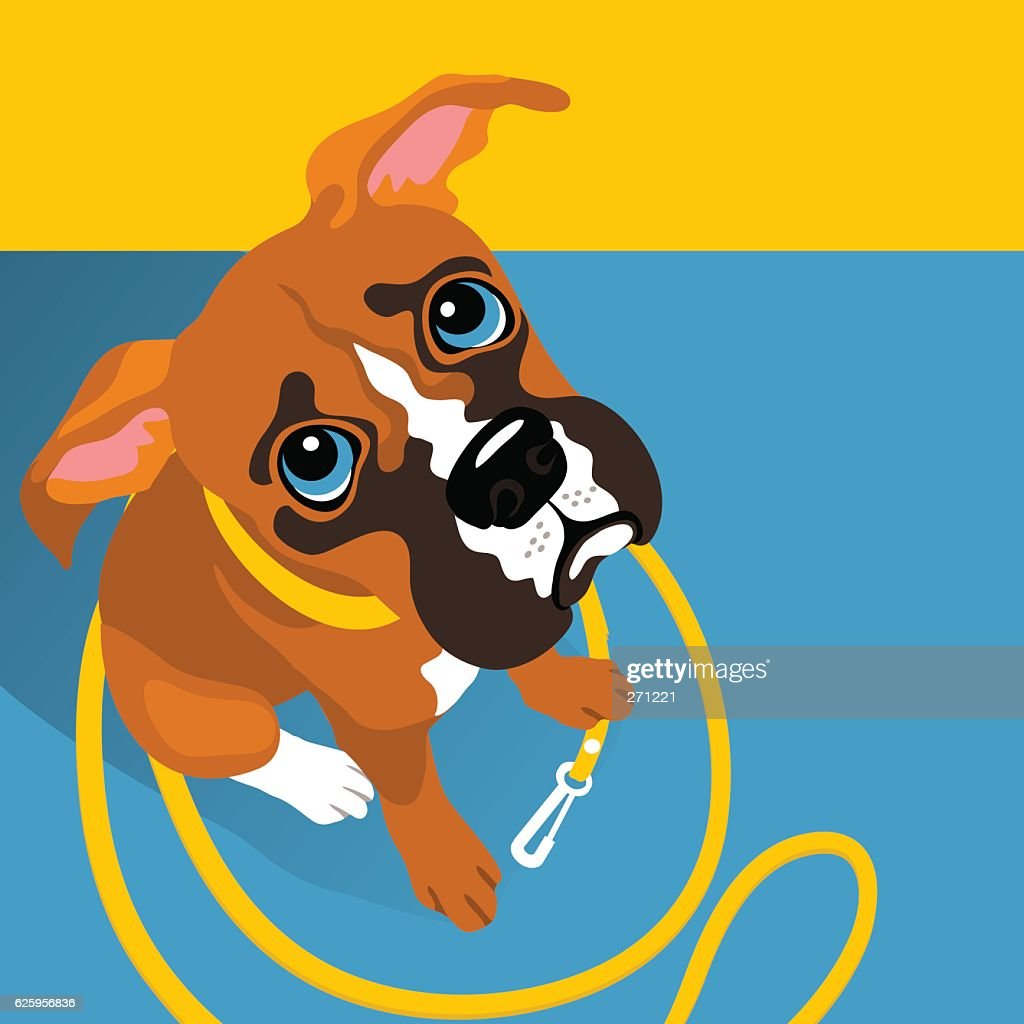 vector illustration of cute Boxer puppy with leash