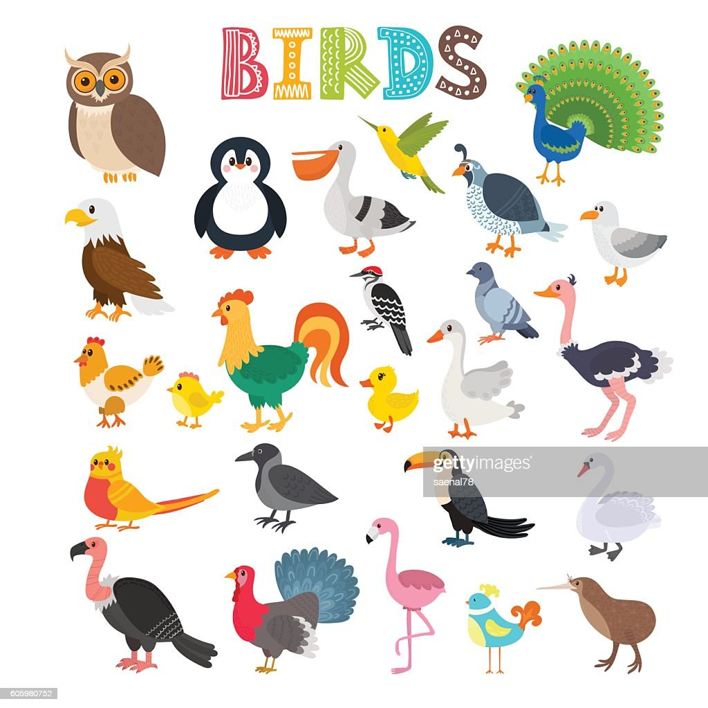 Vector illustration of different kind of birds