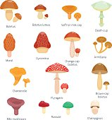 Vector illustration of different types of mushrooms
