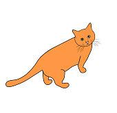 Vector illustration of domestic cat