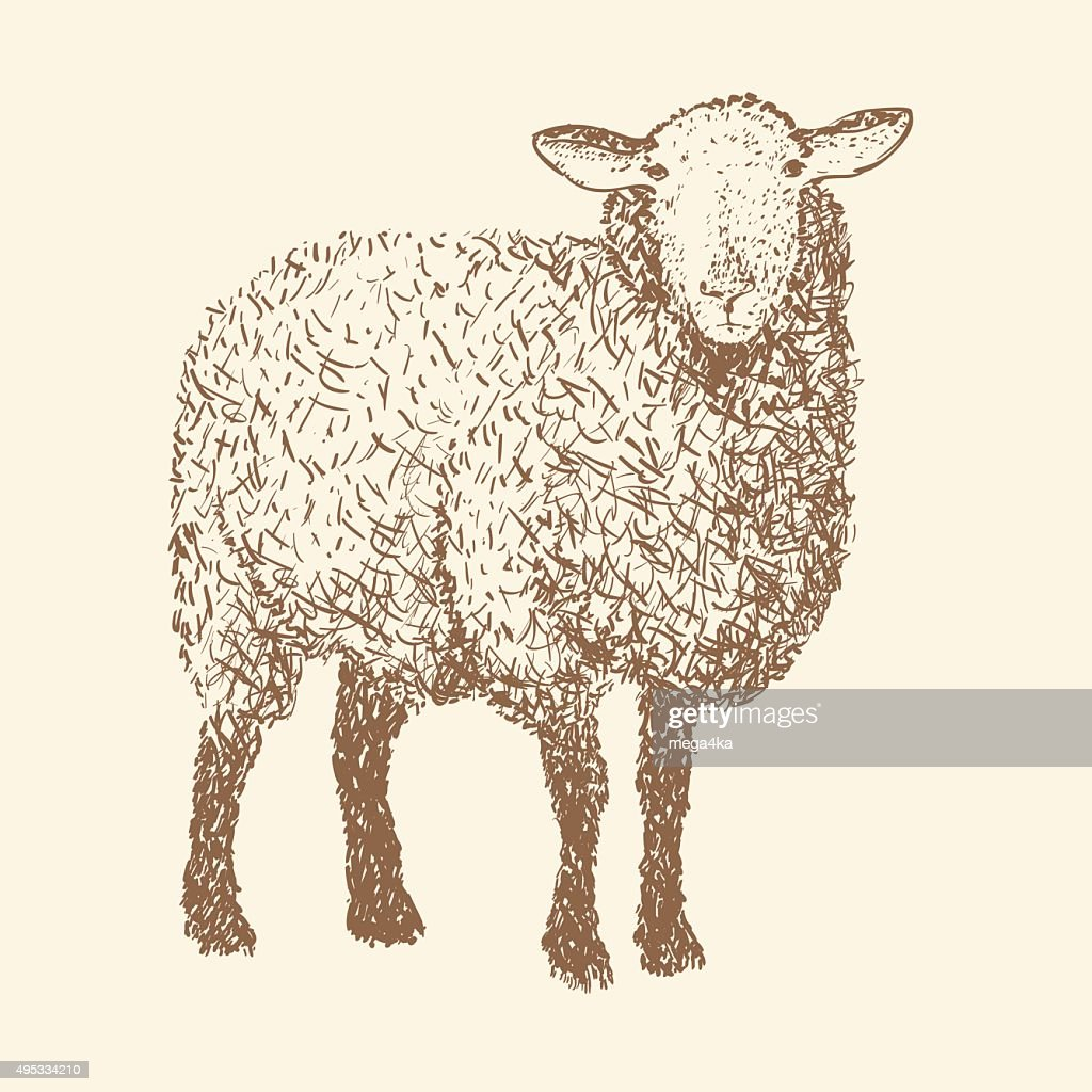 vector illustration of engraving sheep, isolated design object, sketch drawing