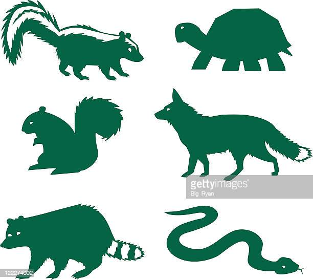 vector illustration of forest animals - skunk stock illustrations