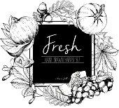 Vector  illustration of fresh vegetables. Hand drawn vintage set