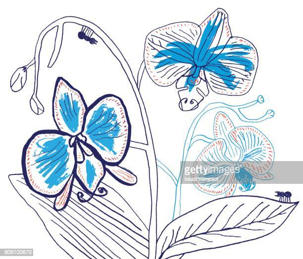 vector illustration of hand drawn orchid - flowers white background stock illustrations, clip art, cartoons, & icons