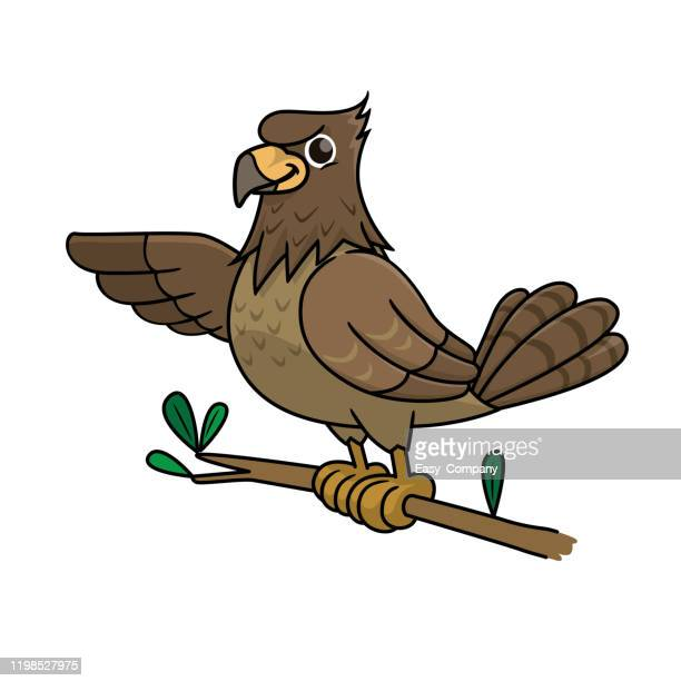 vector illustration of hawk isolated on white background. - peregrine falcon stock illustrations