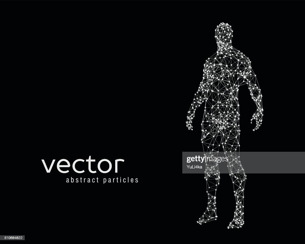 Vector illustration of human body