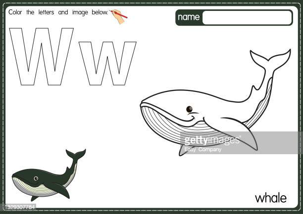 vector illustration of kids alphabet coloring book page with outlined clip art to color. letter w for whale. - humpback dolphin stock illustrations