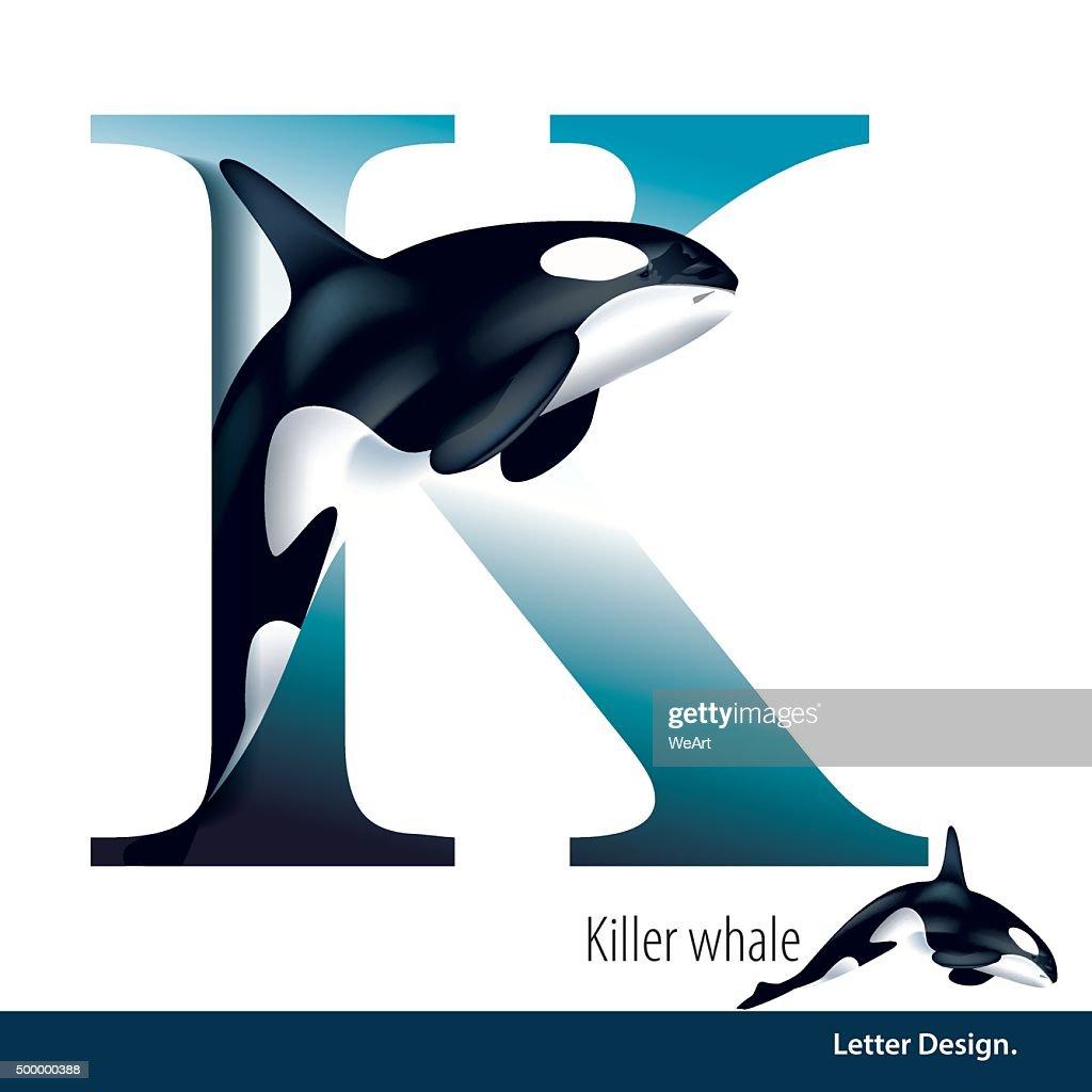 Vector illustration of Letter K is Killer Whale alphabet.