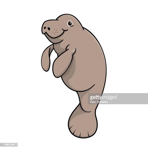 ilustrações, clipart, desenhos animados e ícones de ilustração vetorial de manato isolado em fundo branco. - animais em extinção