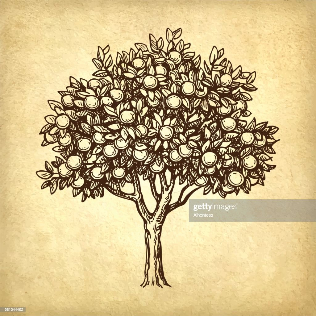 Vector illustration of orange tree